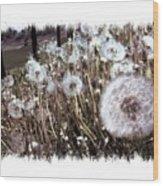 Dandelion Wishes Wood Print