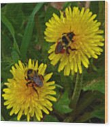 Dandelions And Bees Wood Print
