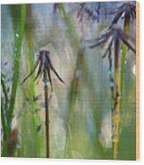 Dandelions Close-up Wood Print