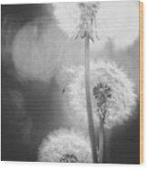 Dandelions In Sunlight Wood Print