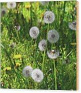 Dandelions On The Maryland Appalachian Trail Wood Print