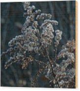 Dandy Dry Wood Print