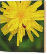 Dandy Lady Bug Wood Print