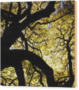Dangerous Curves Wood Print