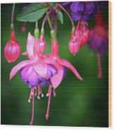 Danglers Wood Print