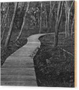 Daniel Webster Boardwalk IIi Wood Print