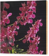 Danrobium Orchids Used To Make Lais Wood Print