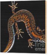 Danube Crested Newt Wood Print