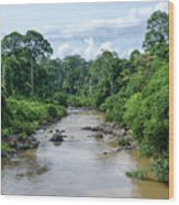 Danum Valley Wood Print