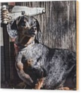 Dapple Dachshund Wood Print