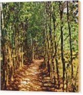 Dappled Days Wood Print