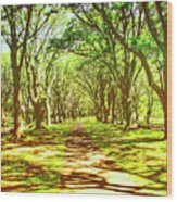 Dappled Wood Print