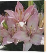 Dappled Pink Lillies Wood Print