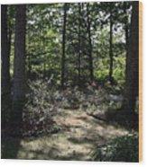 Dappled Sunlight Wood Print
