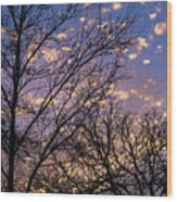 Dappled Sunset-1547 Wood Print