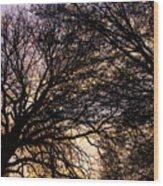 Dappled Sunset-1550 Wood Print