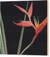 Daring Heliconia Acuminata Wood Print