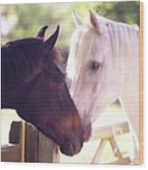 Dark Bay And Gray Horse Sniffing Each Other Wood Print
