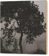 Dark Elm By River Wood Print