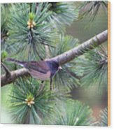 Dark-eyed Junco On A Pine Tree Wood Print
