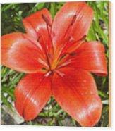 Dark Orange Red Lily II Wood Print