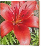 Dark Orange Red Lily Wood Print