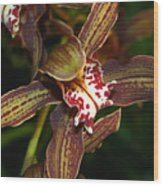 Dark Orchid Wood Print