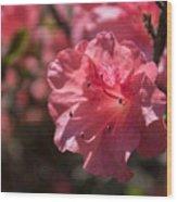 Dark Pink Azalea Wood Print