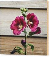 Dark Pink Hollyhocks Wood Print