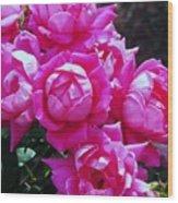 Dark Pink Roses Wood Print