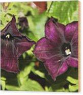 Dark Purple Petunia Wood Print