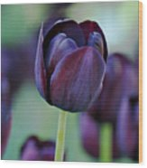 Dark Purple Tulip Wood Print