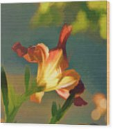 Dark Red Day Lily With Sun Shining Through I Abstract I Wood Print
