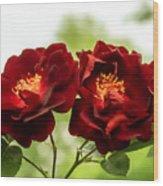 Dark Red Roses Wood Print