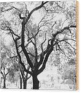 Dark Roots Wood Print