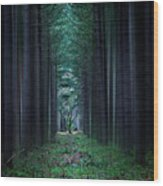 Dark Side Of Forest Wood Print