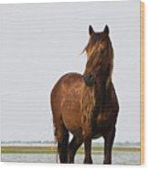 Dark Stallion Wood Print