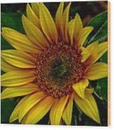 Dark Sunflower Wood Print