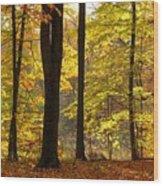 Dark Trunks Bright Leaves Wood Print