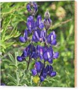 Lupin Flower Wood Print