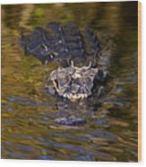 Dark Water Predator Wood Print