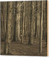 Dark Woods Wood Print
