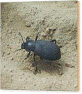 Darkling Beetle In Sand Wood Print