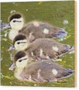 Darling Ducklings  Wood Print