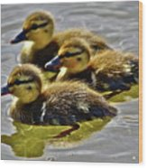 Darling Ducks Wood Print