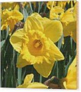 Darling Spring Daffodils Wood Print