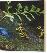 Dart Frogs On The Move Wood Print