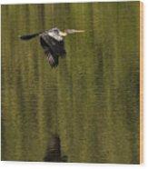 Darter Wood Print