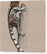 Darwinius masillae Wood Print