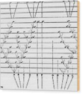 Darwins Scheme For Evolution Of Species Wood Print